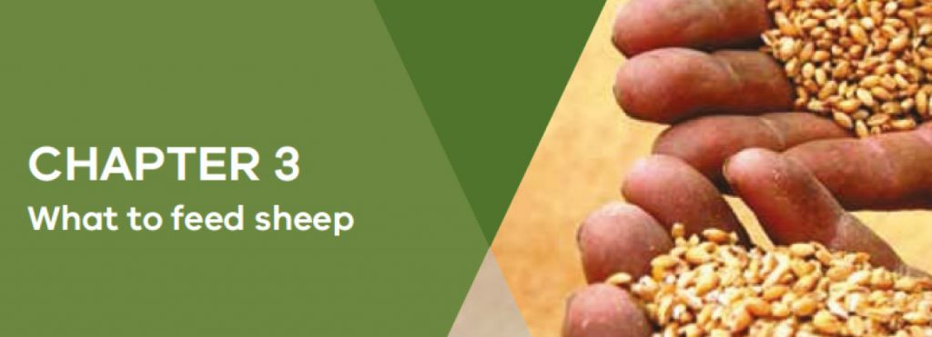 Sheep Drought Book Chapter 3 Header image